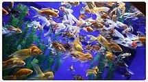 10.Ripley's Aquarium 2019