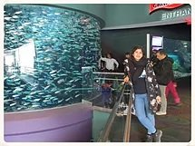 3.Ripley's Aquarium 2019