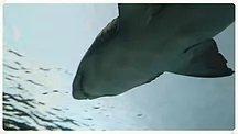 6.Ripley's Aquarium 2019