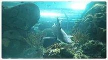 7.Ripley's Aquarium 2019