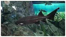 8.Ripley's Aquarium 2019